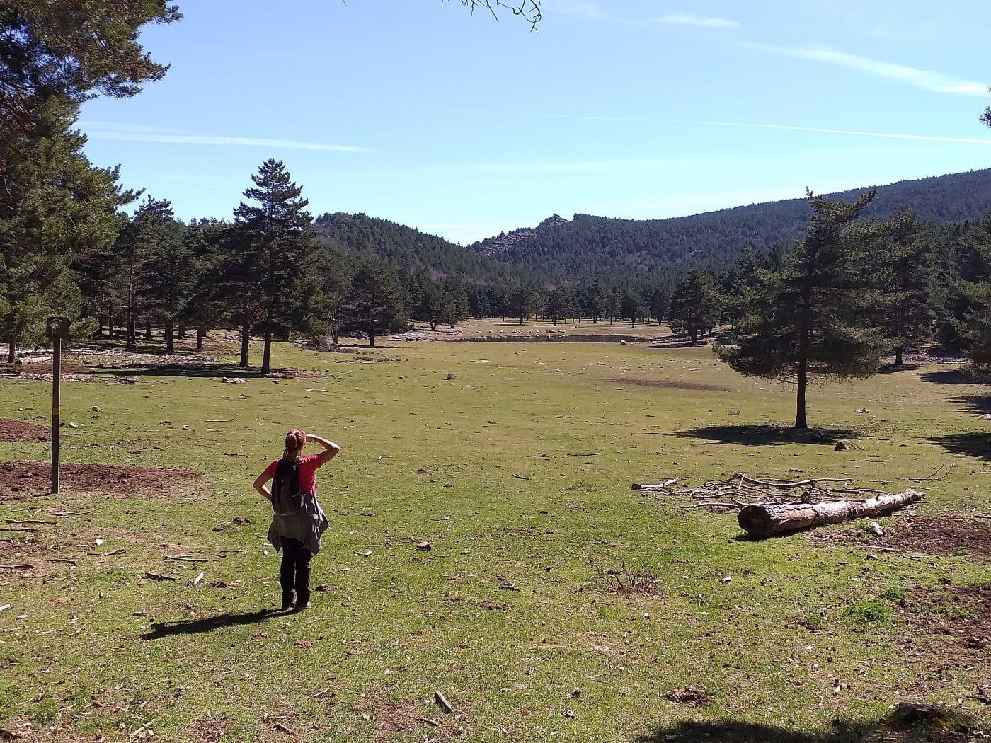 Sierra de Cebollera
