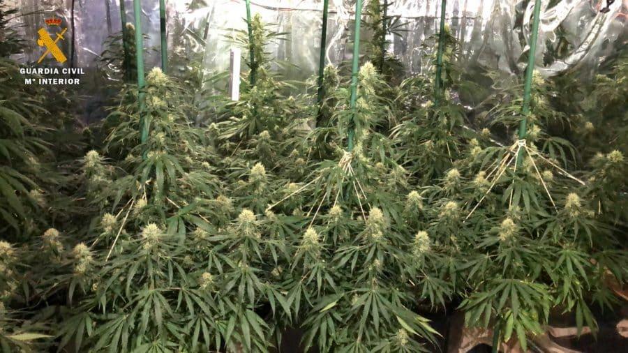 Desmantelan en La Rioja el primer cultivo 'indoor' de marihuana con iluminación LED y música para estimular el crecimiento de las plantas 2