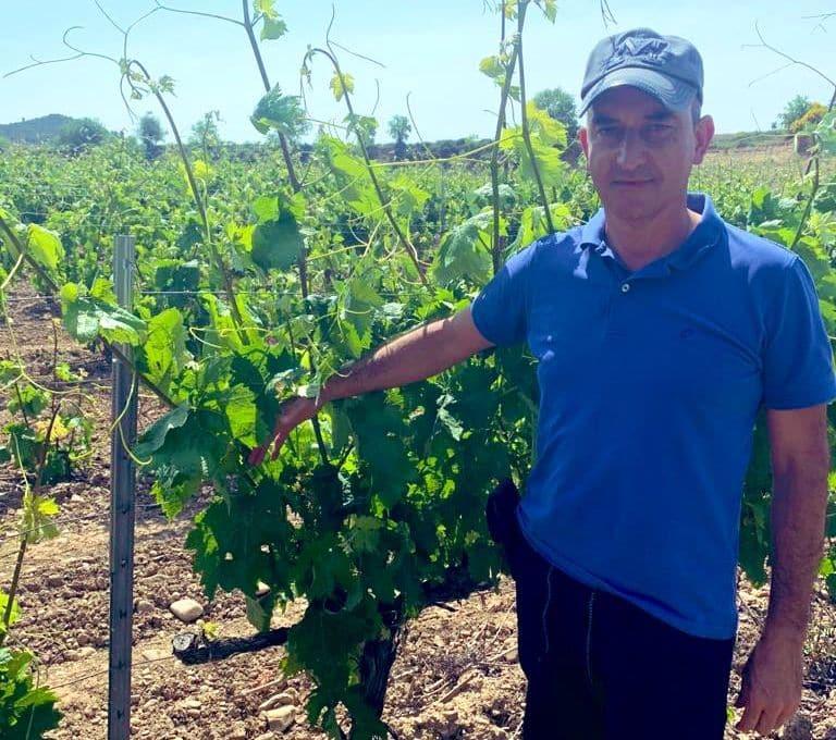 Agricultura incide en la importancia de proteger los viñedos frente al mildiu 1