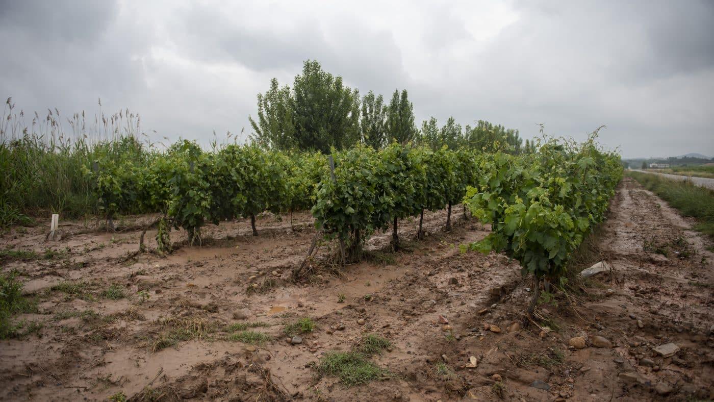 El Gobierno riojano realizará mejoras en Ollauri y Navarrete para favorecer la canalización tras las tormentas 26