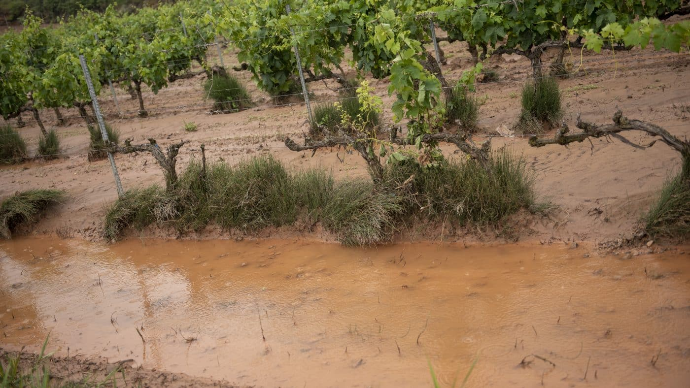 El Gobierno riojano realizará mejoras en Ollauri y Navarrete para favorecer la canalización tras las tormentas 25
