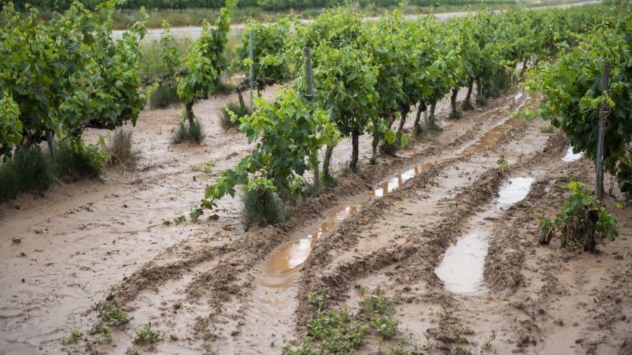 El Gobierno riojano realizará mejoras en Ollauri y Navarrete para favorecer la canalización tras las tormentas 24