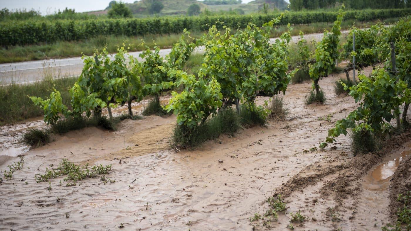 El Gobierno riojano realizará mejoras en Ollauri y Navarrete para favorecer la canalización tras las tormentas 23