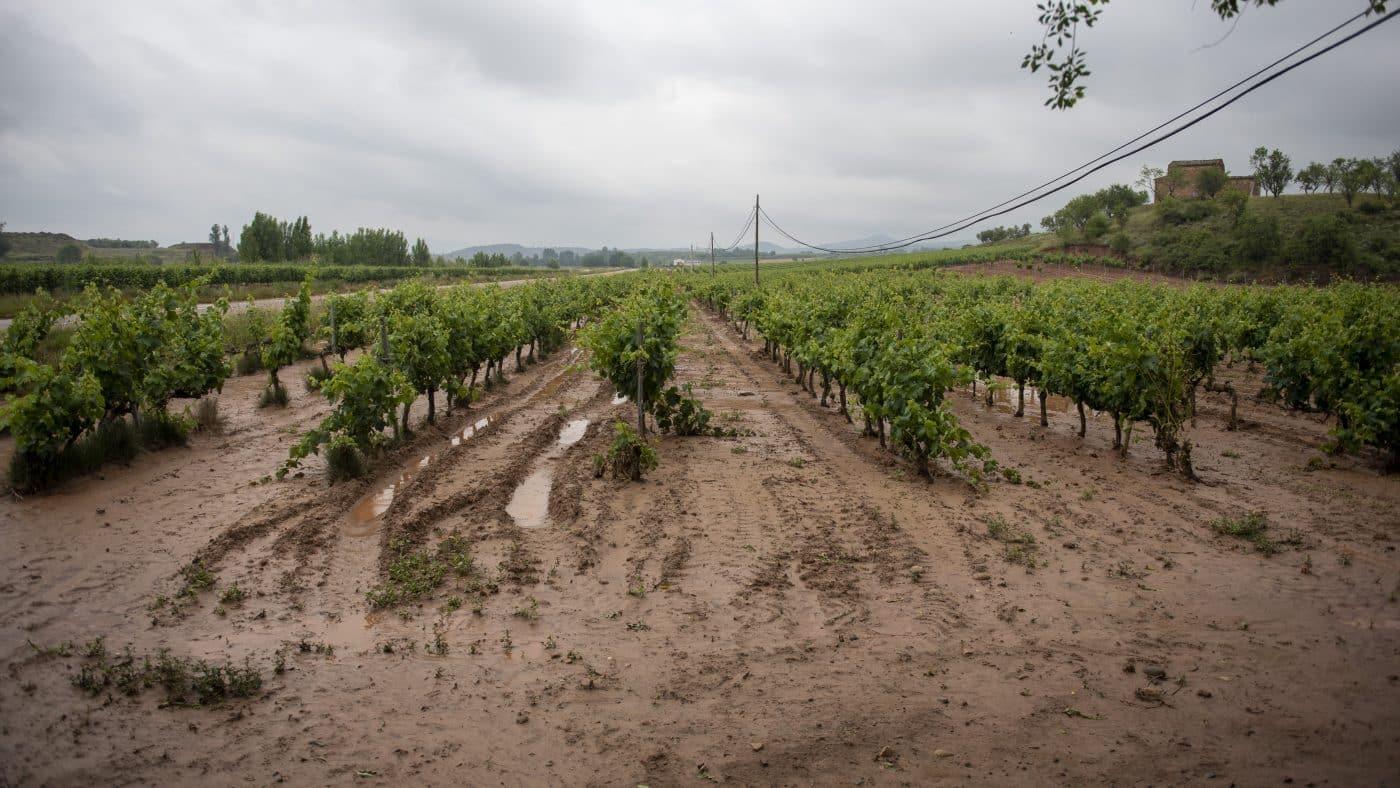 El Gobierno riojano realizará mejoras en Ollauri y Navarrete para favorecer la canalización tras las tormentas 22