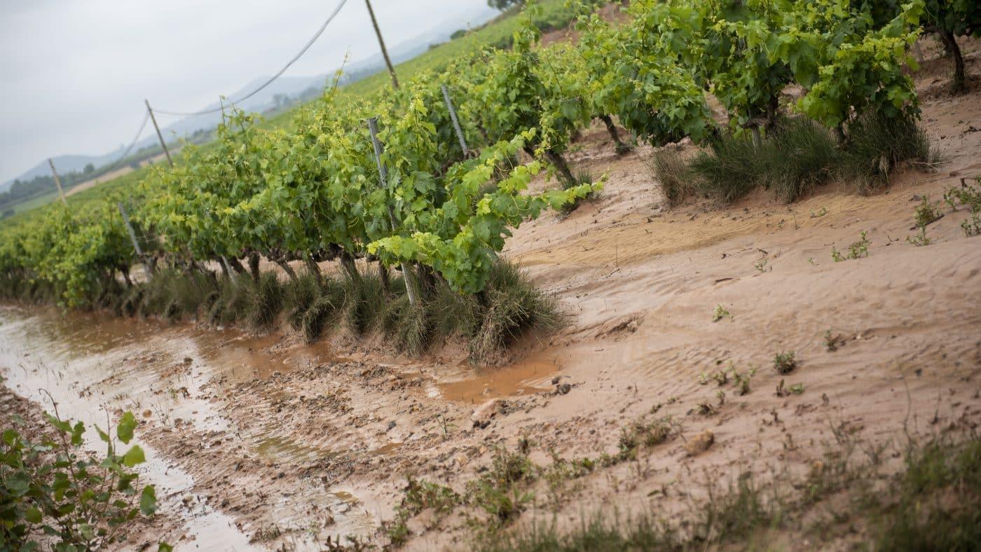 El Gobierno riojano realizará mejoras en Ollauri y Navarrete para favorecer la canalización tras las tormentas 19