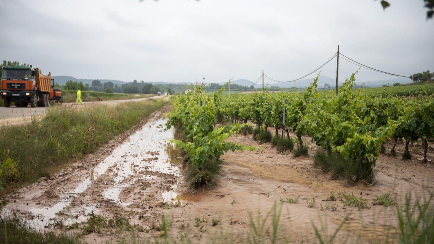 El Gobierno riojano realizará mejoras en Ollauri y Navarrete para favorecer la canalización tras las tormentas 17