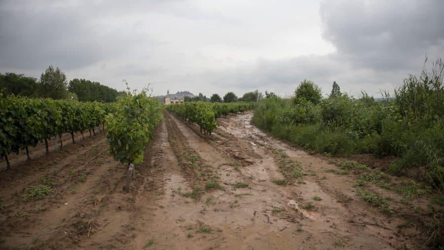 El Gobierno riojano realizará mejoras en Ollauri y Navarrete para favorecer la canalización tras las tormentas 31