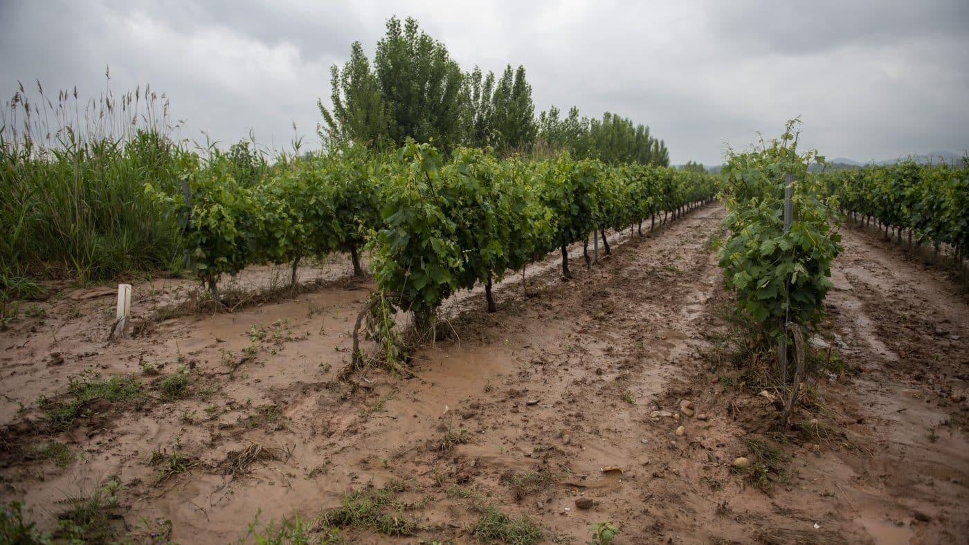 El Gobierno riojano realizará mejoras en Ollauri y Navarrete para favorecer la canalización tras las tormentas 32