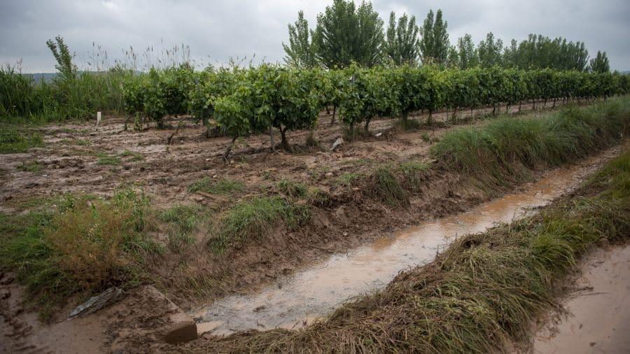El Gobierno riojano realizará mejoras en Ollauri y Navarrete para favorecer la canalización tras las tormentas 34