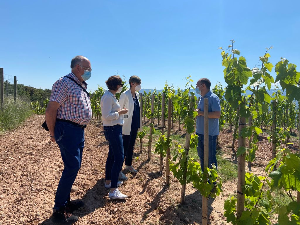 El Ministerio cofinancia el proyecto de Vinos Vintae para elaborar espumosos ancestrales con uvas del Alto Najerilla 1