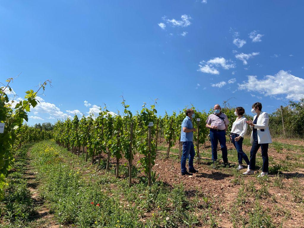 El Ministerio cofinancia el proyecto de Vinos Vintae para elaborar espumosos ancestrales con uvas del Alto Najerilla 2