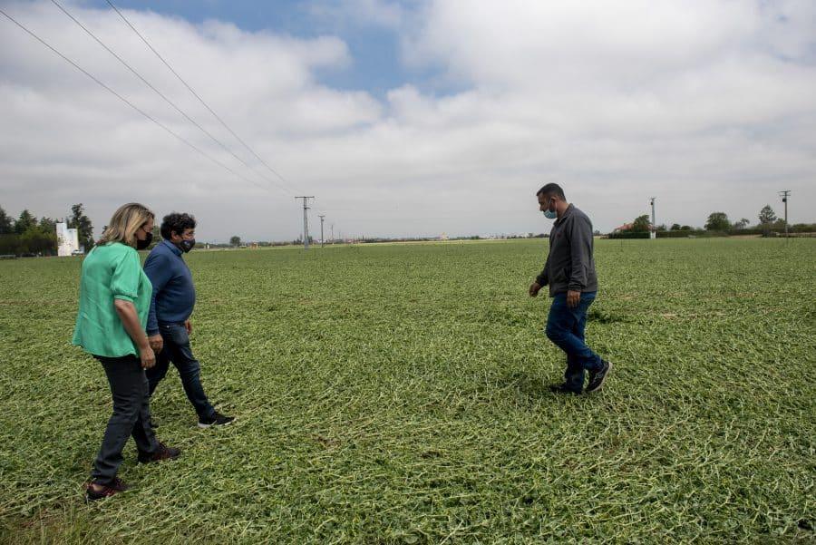 Hita conoce de primera mano los daños por las tormentas en los cultivos de Santo Domingo 1
