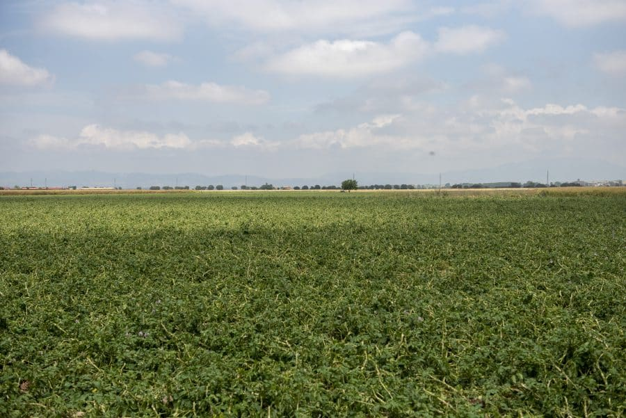 Hita conoce de primera mano los daños por las tormentas en los cultivos de Santo Domingo 13