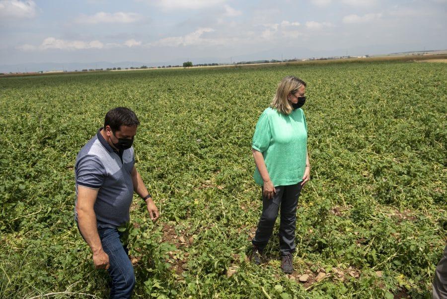 Hita conoce de primera mano los daños por las tormentas en los cultivos de Santo Domingo 12
