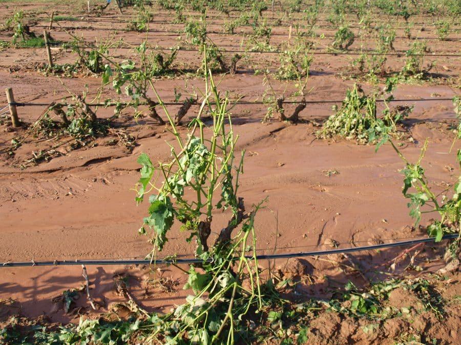 La Rioja emite recomendaciones a agricultores en viñedo, frutales y olivo tras las tormentas con granizo 2