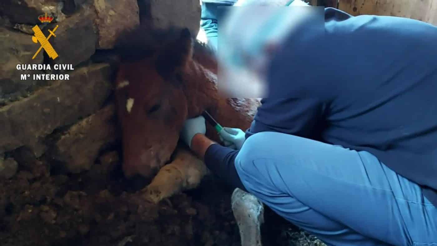 El Seprona investiga a una persona por la muerte de un potro en La Rioja 4