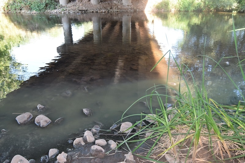 Denuncian que continúan los vertidos de aguas residuales al Najerilla desde el casco urbano de Nájera 1