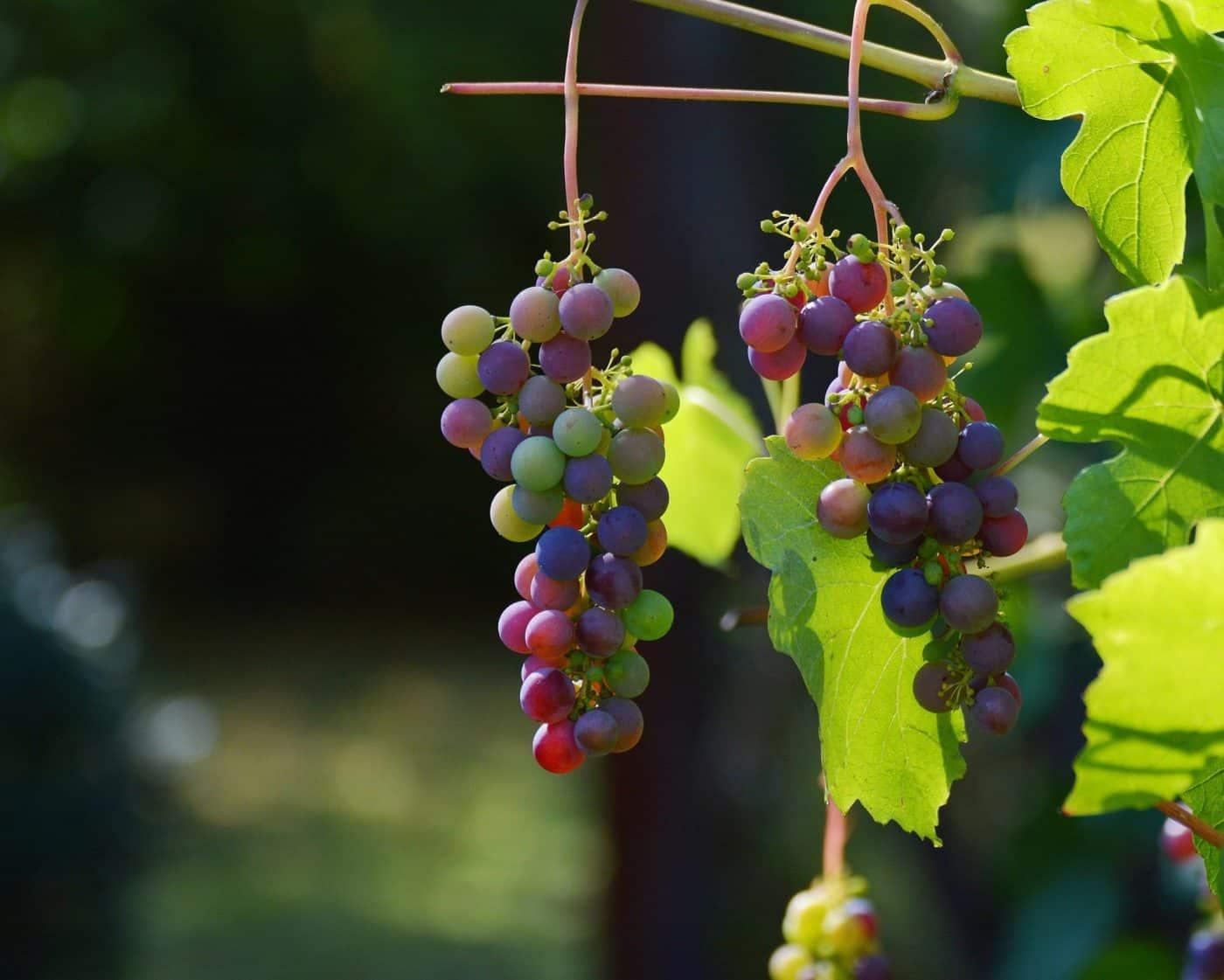Bodegas Roda apuesta por la energía solar térmica para la elaboración de sus vinos 2