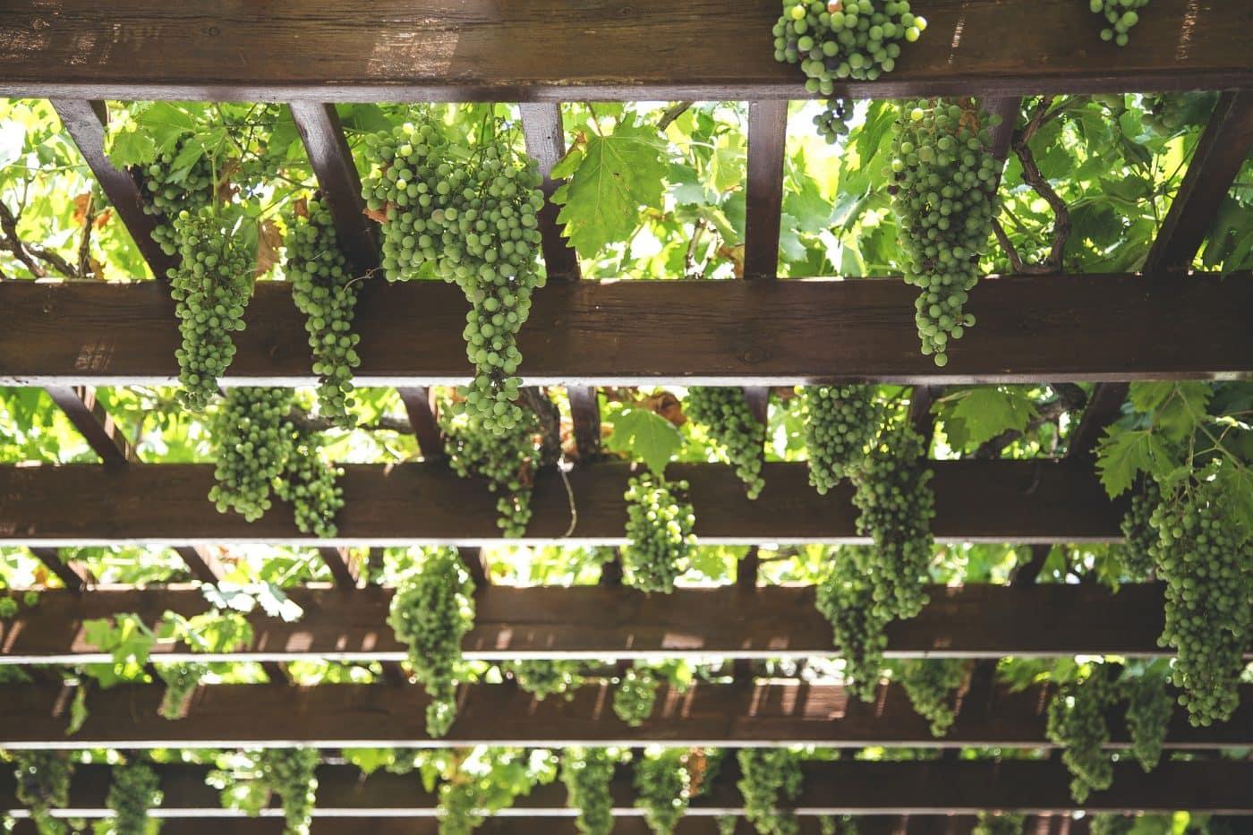 Bodegas Roda apuesta por la energía solar térmica para la elaboración de sus vinos 1