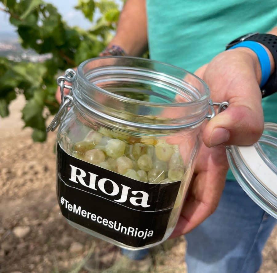 Rioja entra de lleno en la vendimia: unos 90 millones de kilos recogidos 1