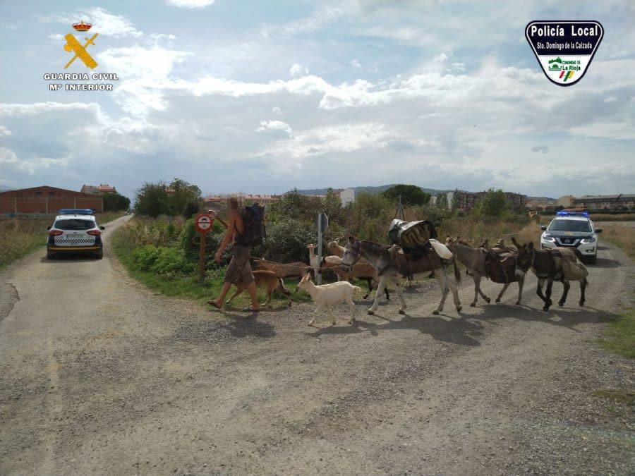 Identifican en Santo Domingo a un peregrino que realizaba el Camino de Santiago con varios animales sin documentación 1