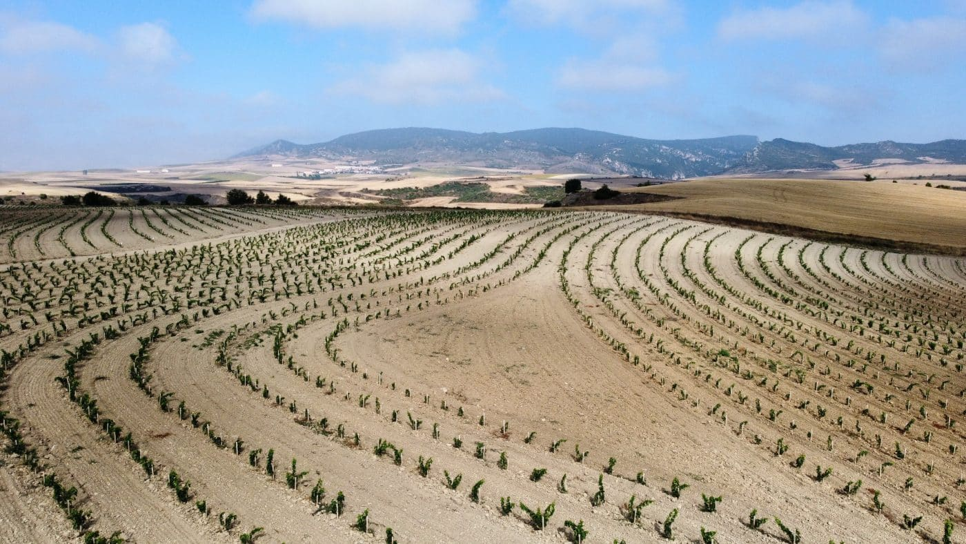 Bodegas Roda apuesta en Cellorigo por la viticultura regenerativa a través de un rompedor proyecto 3