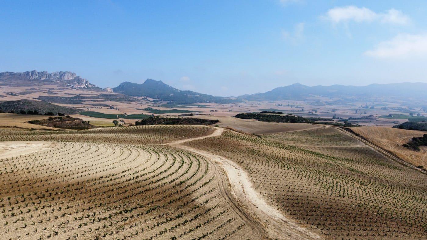 Bodegas Roda apuesta en Cellorigo por la viticultura regenerativa a través de un rompedor proyecto 5