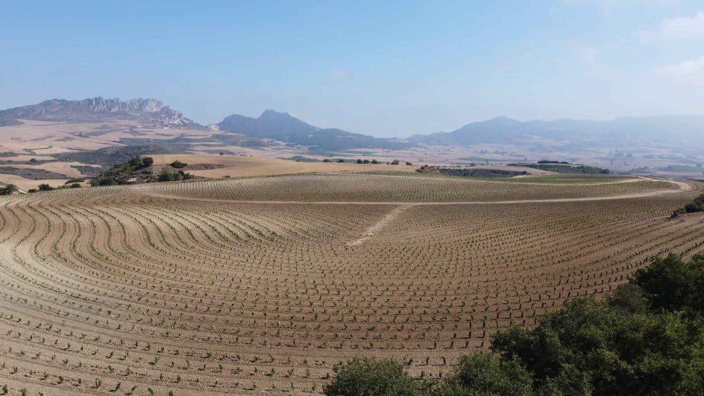 Bodegas Roda apuesta en Cellorigo por la viticultura regenerativa a través de un rompedor proyecto 2