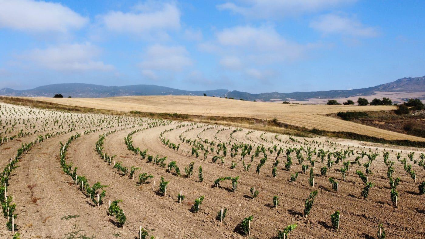 Bodegas Roda apuesta en Cellorigo por la viticultura regenerativa a través de un rompedor proyecto 4