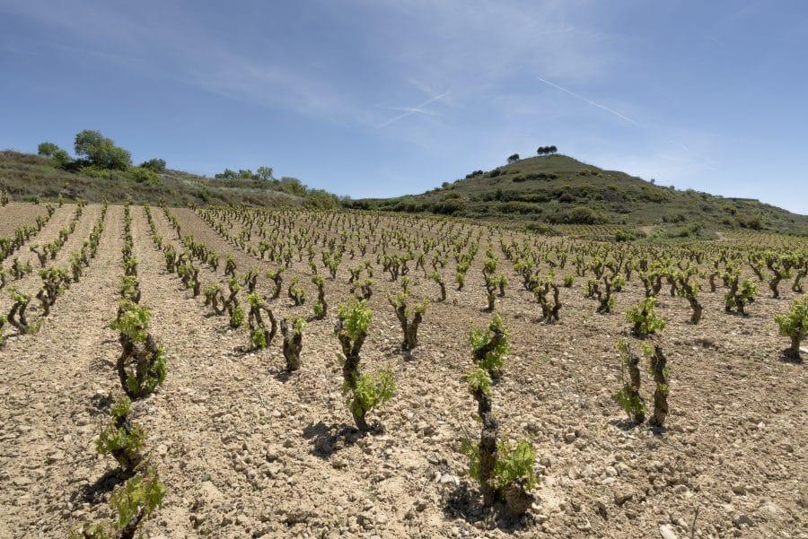 Bodegas Viñedos de Sonsierra presenta en el Centro Riojano sus nuevos vinos singulares 5