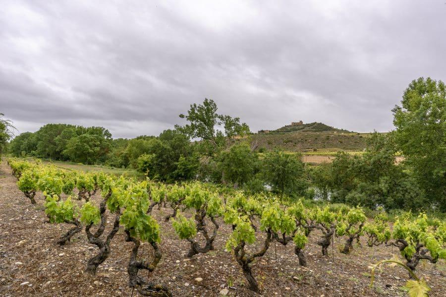 Bodegas Viñedos de Sonsierra presenta en el Centro Riojano sus nuevos vinos singulares 6