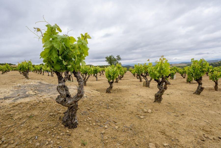 Bodegas Viñedos de Sonsierra presenta en el Centro Riojano sus nuevos vinos singulares 7