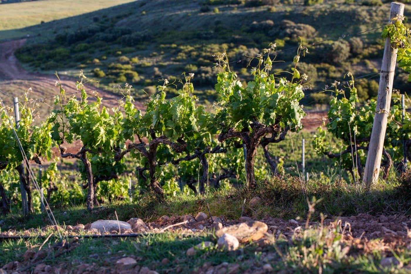 Ramón Bilbao, única bodega española fundadora de una iniciativa global por la sostenibilidad en el sector del vino 1