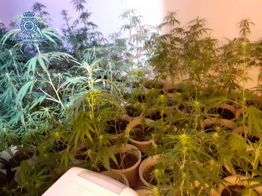La Policía detiene a cuatro personas tras desmantelar una plantación de marihuana en Logroño 5